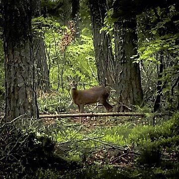 Little deer gem by widdy170