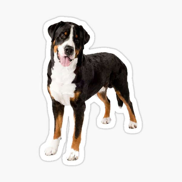 Greater Swiss Mountain Dog Sticker