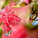 Water droplet refractions by Richard Majlinder