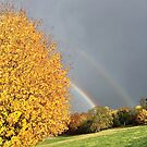 Autumnal yellow leaves, brilliant rainbow and grey sky by brilliantbeings
