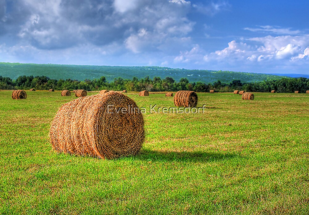Hay There by Evelina Kremsdorf