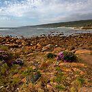 Rocky bay with wild flowers by Richard Majlinder