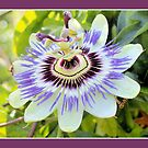 Passion flower by aapshop