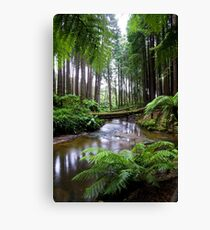 Redwood Forest Stream Canvas Print