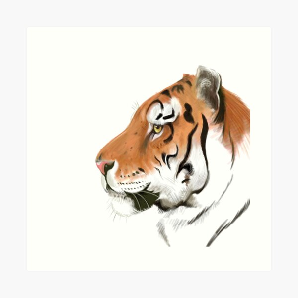 Portrait of a Tiger on white background Art Print