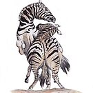 Zebras Fighting by Meaghan Roberts