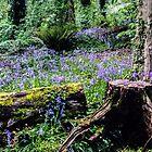 « Jacinthe des bois » par lmulholland