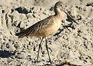 Shorebird aka Marbled Godwit by Betsy  Seeton