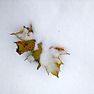 Leaves in the Snow, November 2018 by Jane Neill-Hancock