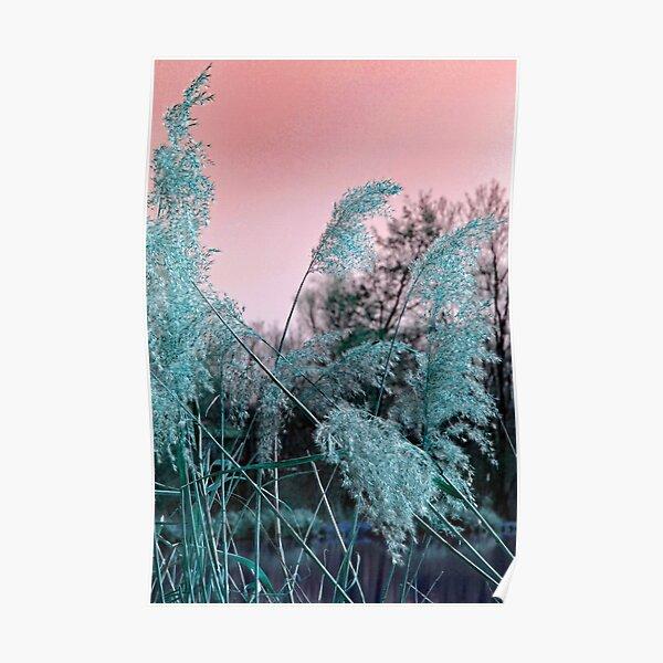 Delicate grasses Poster