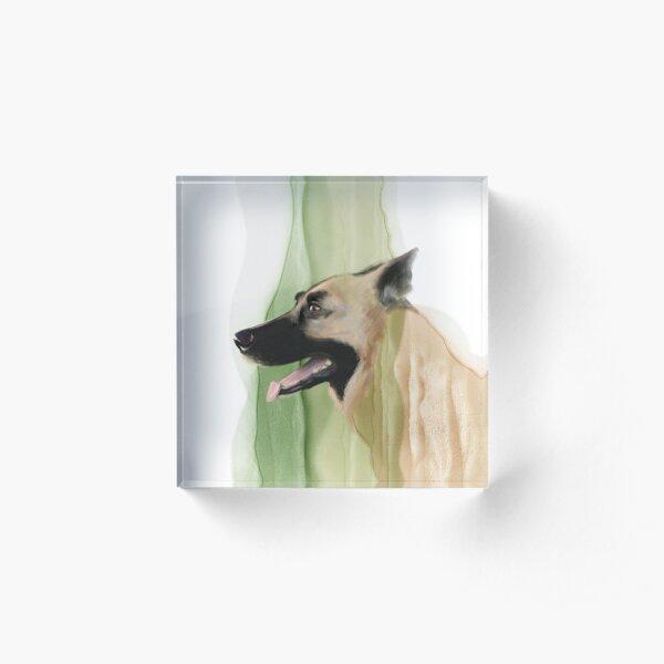Portrait of a Norwegian Elk Hound Acrylic Block