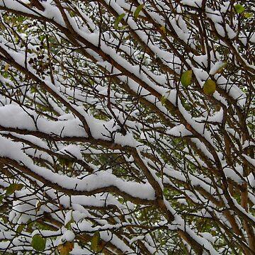 Snow Patterns by WildestArt