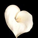 Valentine's Flower by Jodi Turner