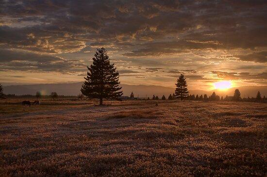 Sunrise Over the Horse Paddock by Antony Burton