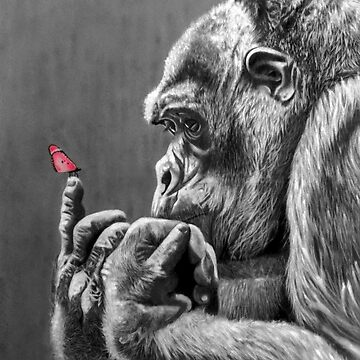 Butterfly and Gorilla by Jpwoody