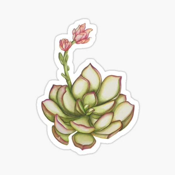 Sweetie Pie  Sticker