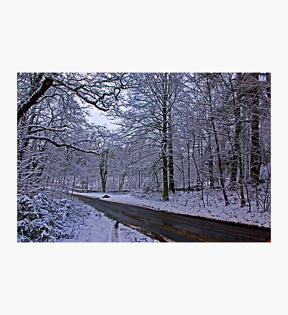 Road Through The Woods Photographic Print