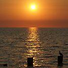 End of day, Rosebud Beach, Victoria, Australia by BronReid