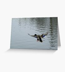 Landing gear down Greeting Card