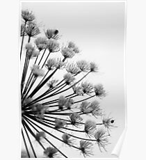 Winter Hogweed Poster