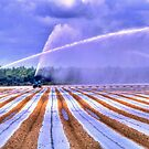 Irrigation Colors by Wayne King