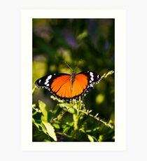 Danaid Eggfly or Mimic Butterfly (female) Art Print