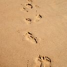 Walk on The Beach by Andrea Kabai