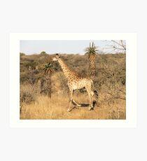 Giraffe KZN Art Print