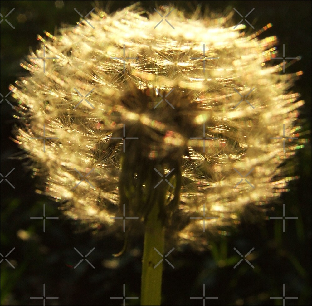 golden whispers by webgrrl