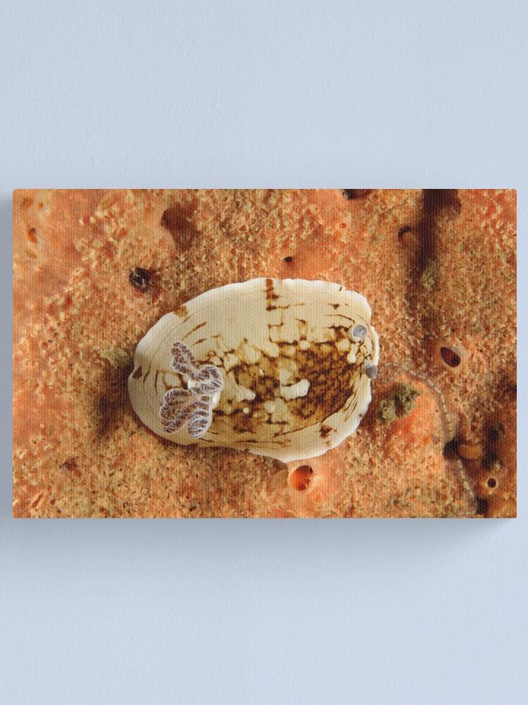 Alternate view of Nudibranch - Aphelodoris varia Canvas Print