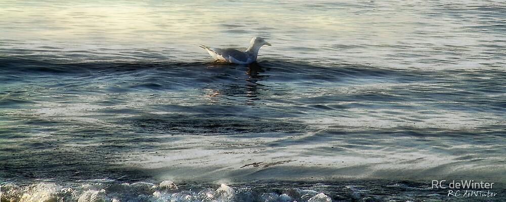 Sunset Swim by RC deWinter