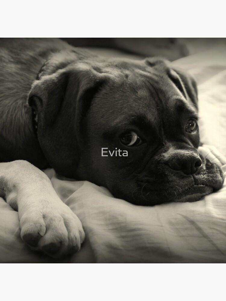 Zeit zum Ausruhen - Boxer Dog Series von Evita