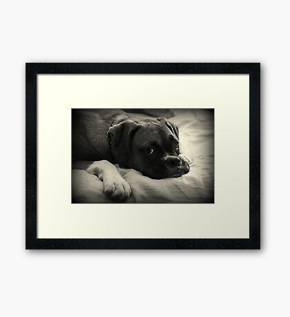 Zeit zum Ausruhen - Boxer Dog Series Gerahmter Kunstdruck