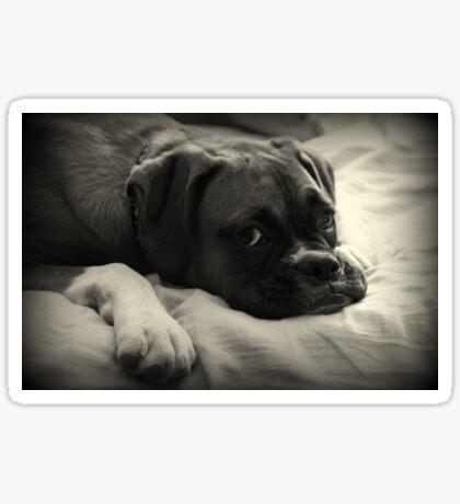 Zeit zum Ausruhen - Boxer Dog Series Sticker