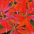 Festive Foliage by Ethna Gillespie