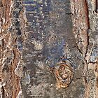 Tree Bark Texture with Knot  by Declan Maybury