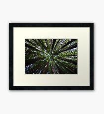 Redwood Forest  Framed Print