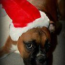 Dino ~Santa's Little Helper ~ Boxer Dog Series by Evita