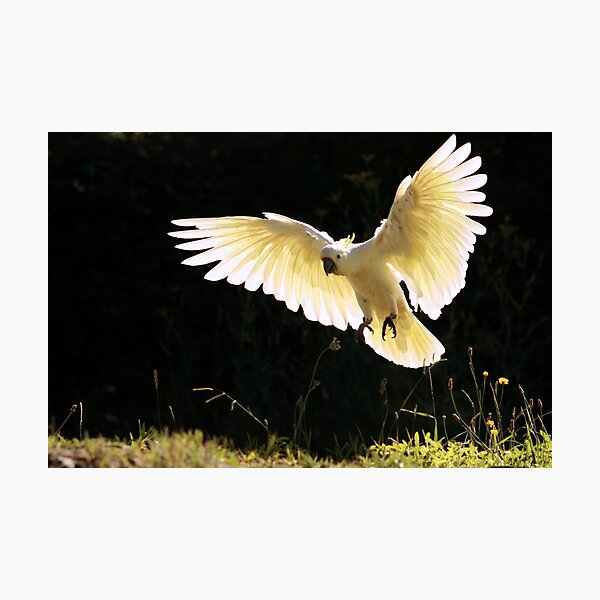 Angelic Wings Photographic Print