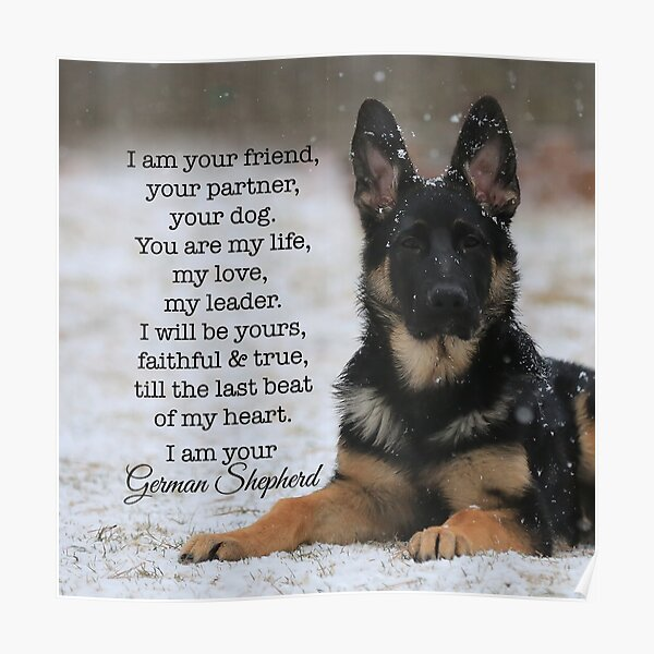 I Am Your German Shepherd Poster