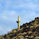 Saguaro Cactus Quartzsite, Arizona by T-ShirtsGifts