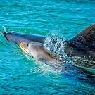 Burrunan Dolphins at play.... by Tracie Louise