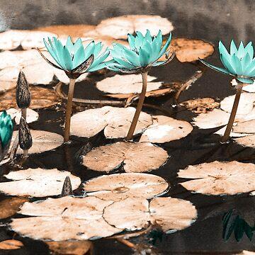 Waterlilies by gavila
