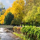 Autumn Colours, Baden Baden, Germany by Michael Dietrich