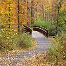 Autumn Path by Monnie Ryan