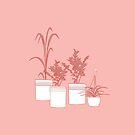 Topfpflanzen von acceberwokfel