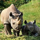 Rhino Mother and Child by Lesliebc