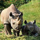 Rhino Mutter und Kind von Lesliebc