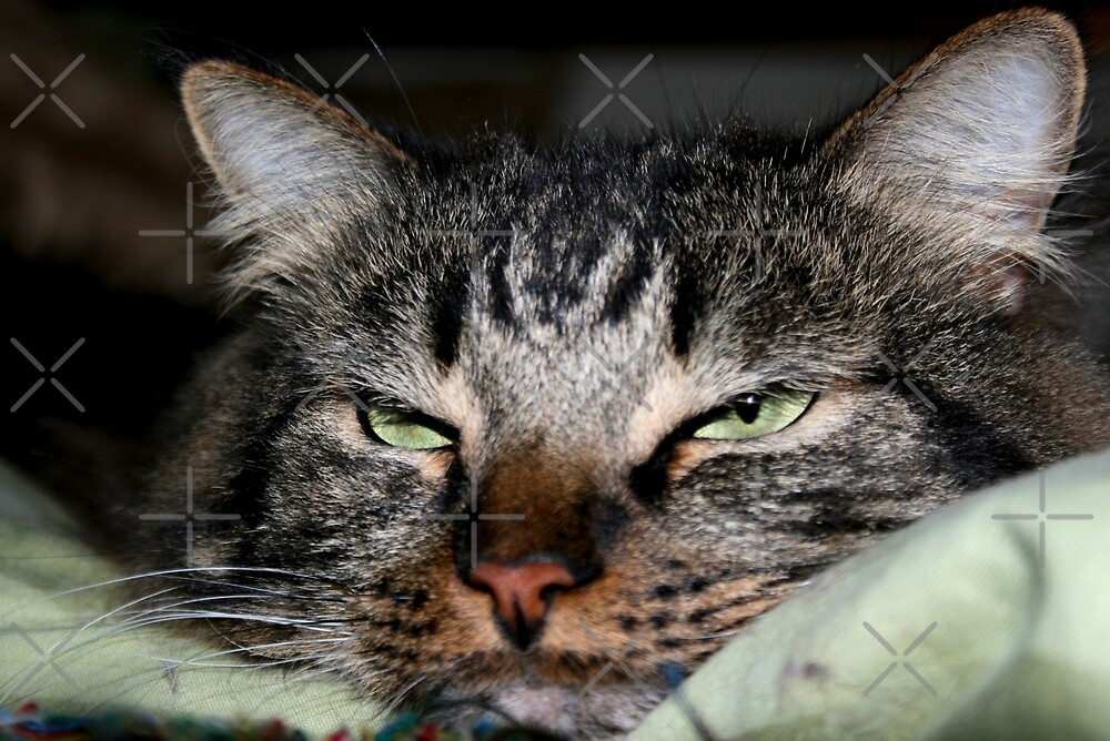 Can't You See I am Trying to Sleep?  by Heather Friedman
