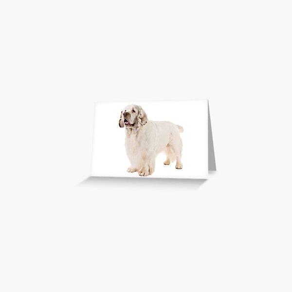 Clumber Spaniels Greeting Card